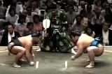 Sumo Tour